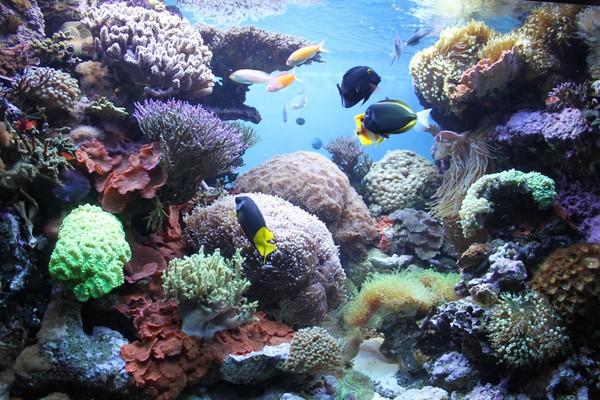 New England Aquarium